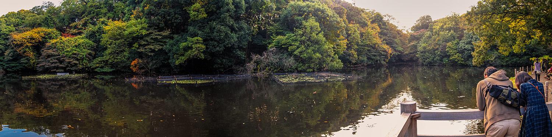 View of Meiji Jingu Inner Gardens Pond in Shibuya, Tokyo, Japan