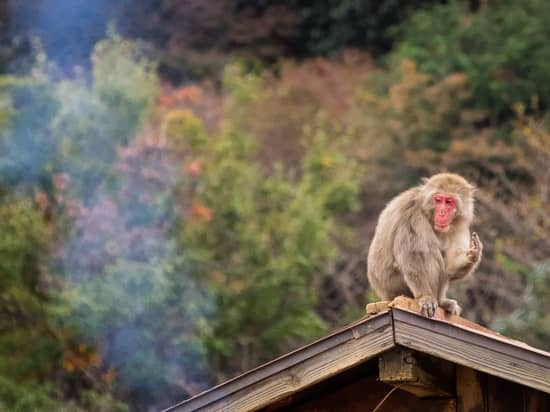 JAPAN 2017: DAY 3, PART 2 – Arashiyama & Kyoto – Iwatayama Monkey Park, Eikando Zenrin-ji Night Illuminations